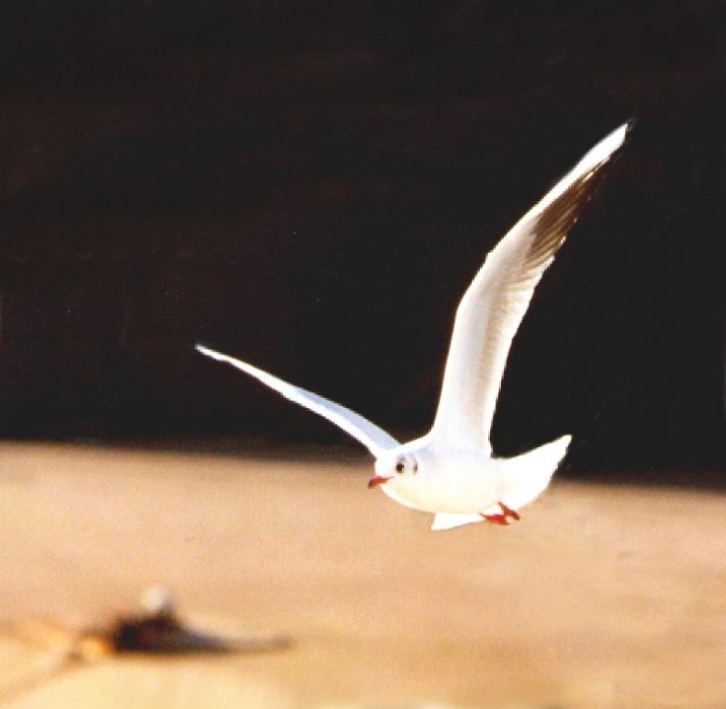 Picture of a Bird in Flight